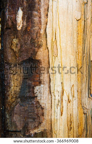 old mouldering oak wood texture