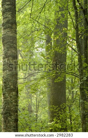 Old natural forest in the summer,europe,poland,bilowieza forest - stock photo