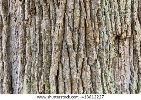 Old oak bark texture, background.