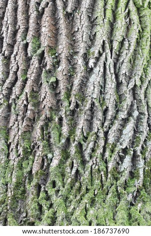 Old oak bark texture with green moss - stock photo