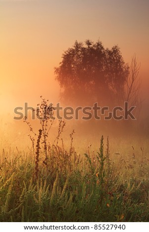 Old oak in misty autumn forest - stock photo