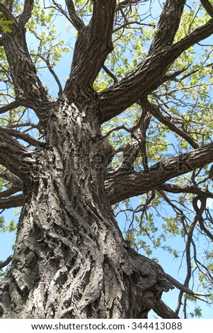Old oak tree crown against a blue sky - stock photo