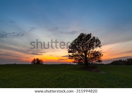 Old oak tree in the field of green grass at colorful sunset - stock photo