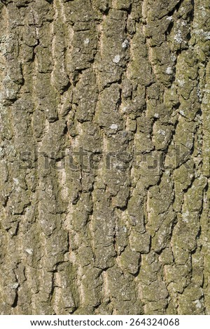 old oak tree trunk bark - stock photo