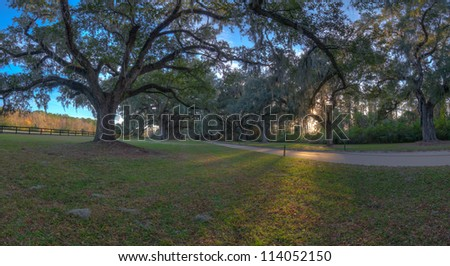 Old Oak Trees Line a Dirt Road in Charleston, South Carolina - stock photo