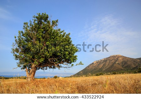 Old olive tree on mountain meadow