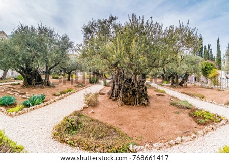 Getsemani Stock Images Royalty Free Images Vectors Shutterstock