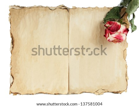 Old paper and rose isolated on white