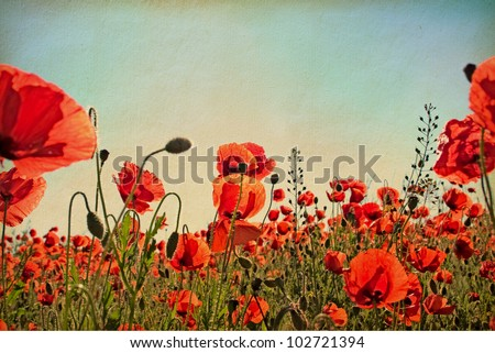 old  paper. Field of poppies - stock photo
