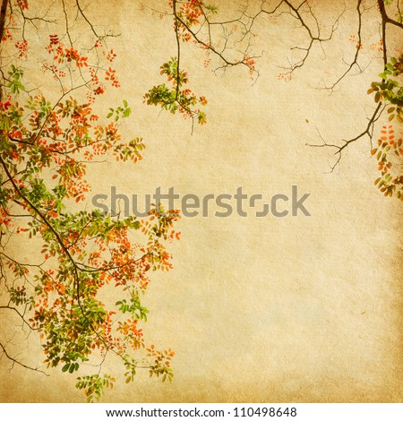 Old paper with branch of autumn leaves. Acacia - stock photo