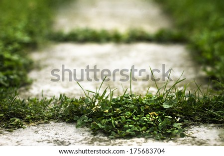 Old path with grass to nowhere - stock photo