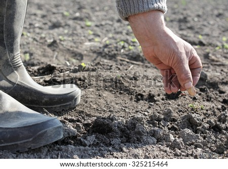 Old peasant hand planting seeds into the soil - stock photo