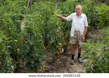 Old peasant standing in garden beside tomato plant - stock photo