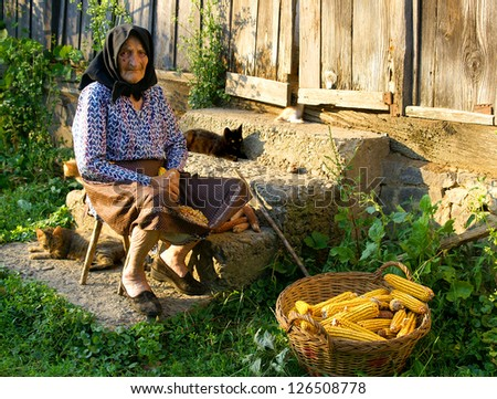 Old peasant woman harvests corncobs near house