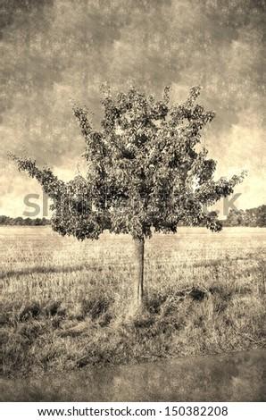 old photo apple tree - stock photo