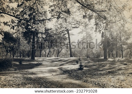 Old photo of the forest - stock photo