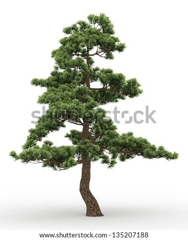 old pine tree isolated on white - stock photo