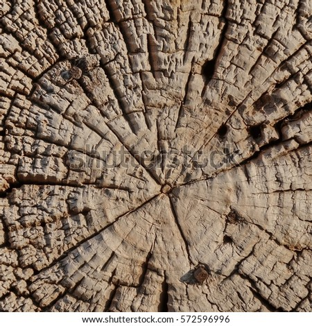 old pine tree log cross section close up weathered frame background grungy wooden square texture - Wooden Cross Frame