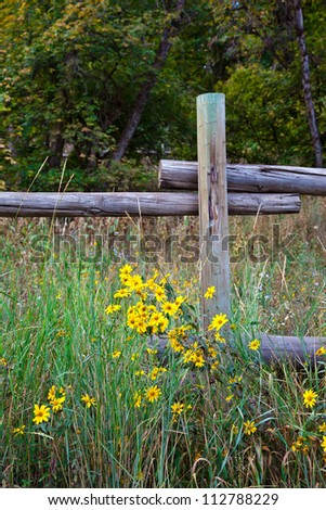 Old Pole Fence with Clump of Wild Flowers in Foreground