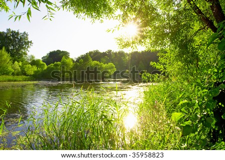 Old pond in the forest with the sun shining through the branches of the trees - stock photo