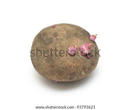 Old potatoes with sprouted shoots on a white background - stock photo