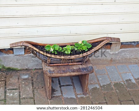 Old retro vintage decor as wooden boot with soil and flower seedlings         - stock photo