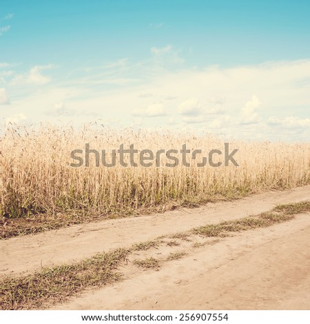 Old road in a wheat field.Special toned photo in vintage style - stock photo