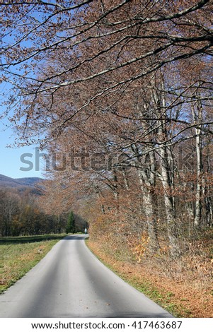 Old road in autumn