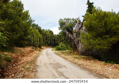 old road in nature pine green forest and ruins of tree in mountains on the island in mediterranean sea
