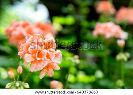 Garden By The Bay Flower rose bay flower stock images, royalty-free images & vectors