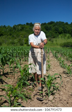 Old rural woman tiller weeding in the corn field