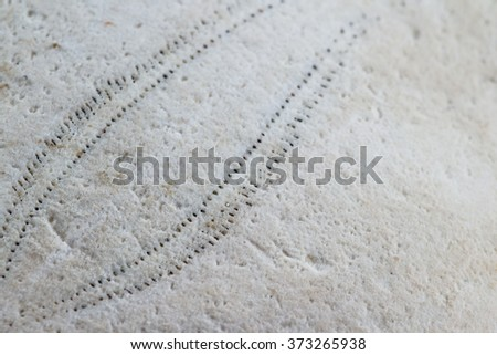 old sand dollar or starfish close up with interesting texture and pattern - stock photo
