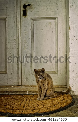 old scary cat sitting in front of an old door