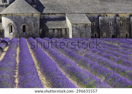 Old Senanque Abbey with blooming lavender field (Provence, France)