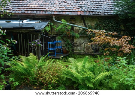old shed with a pond an fern