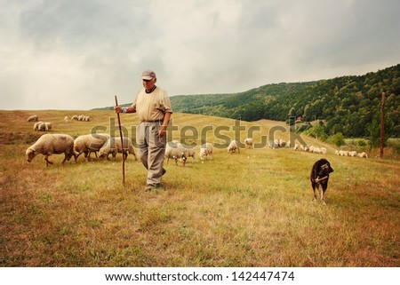 Old shepherd with its flock - stock photo