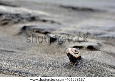 Old snail shell peeking out after a strong wind