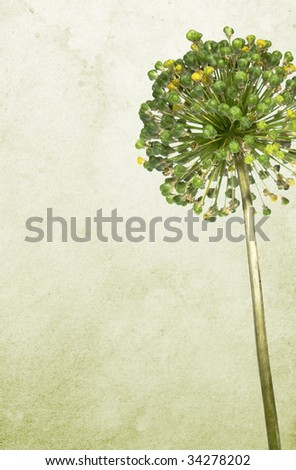 Old stained paper background with green flower. Soft canvas texture. - stock photo