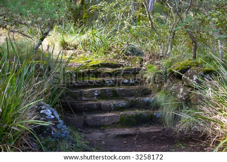 old steps lead up and away to an unknown destination in a natural setting