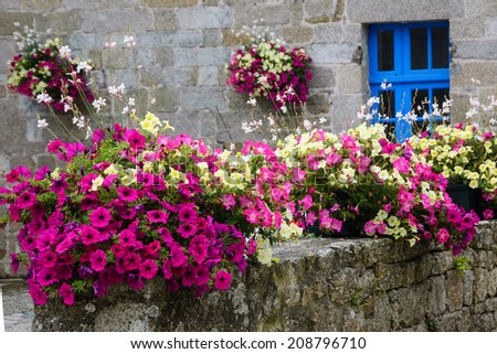Old stone house decorated with colorful petunia flowers in medieval town Moncontour. Brittany, France. - stock photo
