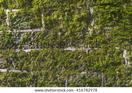 Old stone wall covered with green moss - background and texture