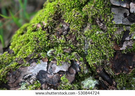 Old stone wall texture with moss on it