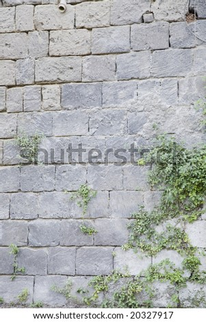 Old Stone Wall With Climbing Ivy