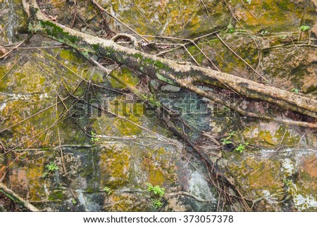 Old stone wall with moss and tree roots background - stock photo