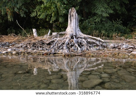 Old stump on shore of lake is reflected in water - stock photo