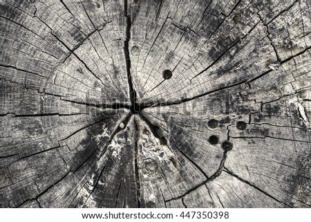 Old stump top view. Wooden texture cracked stump. - stock photo