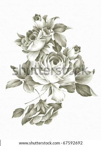 Old-styled rose. Freehand drawing - stock photo