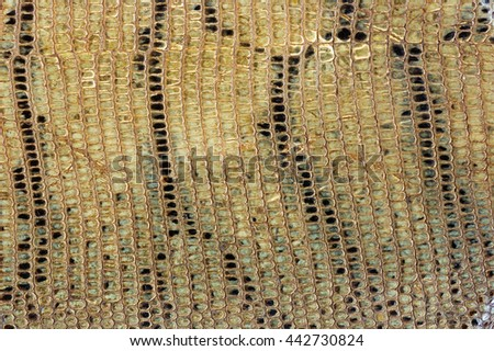 old tanned snake skin background texture - stock photo