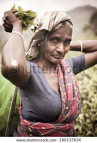 Old Tea Picker Lady, Sri Lanka - stock photo
