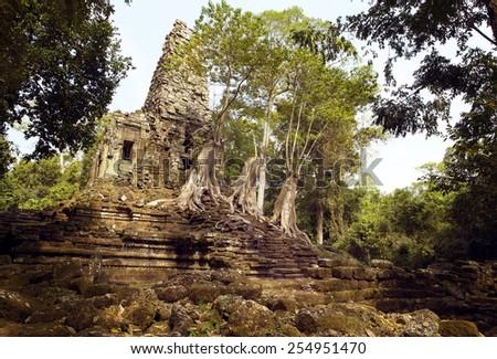 Old Temple and big tree stump at Angkor Thom, Siem Reap, Cambodia. - stock photo